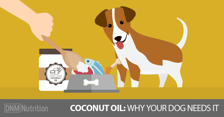 The health benefits of coconut oil for dogs c ng ty c for Can i give my dog fish oil for humans